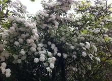 Абхазия цветет!