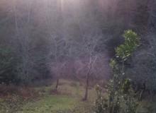 Шаманская поляна