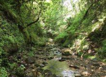 Терапевтическое путешествие в Абхазию… Что-то, напоминающее фото-отчет)))