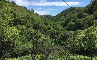 Индивидуальные ретриты в Абхазии и терапия Природой
