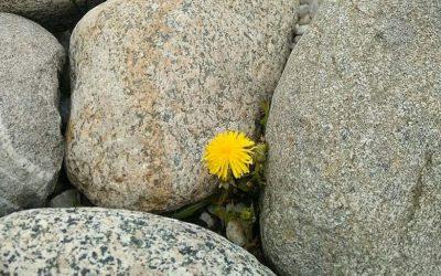 Он-лайн медитации для здоровья (телесного и эмоционального). Без оплаты.